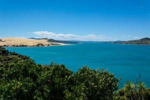 Kauri Coast